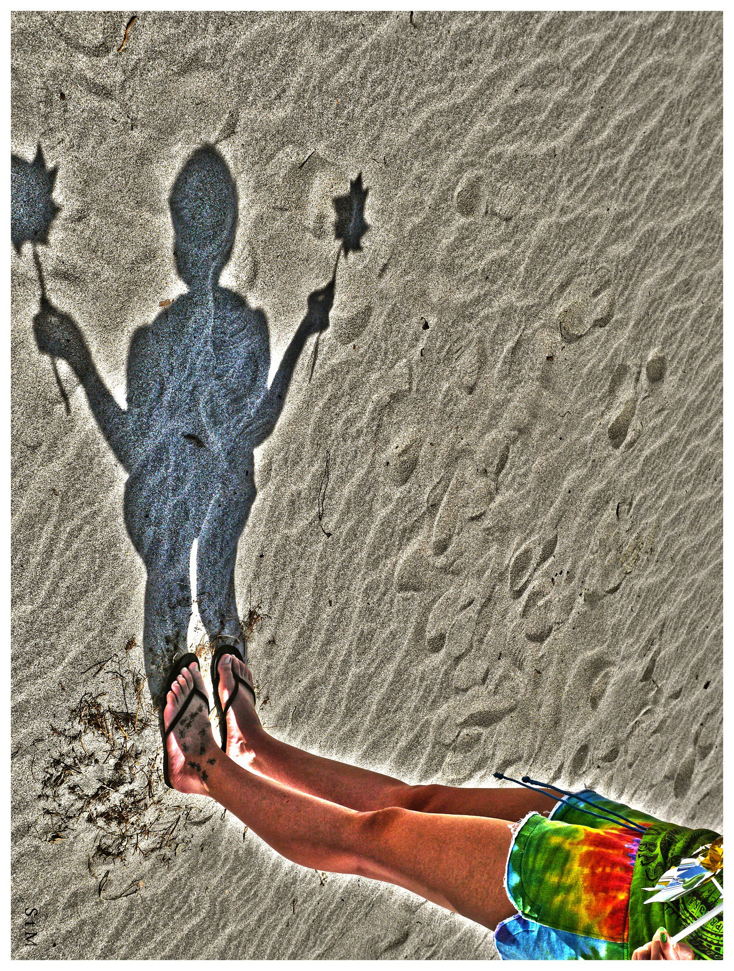 P1000598 desert shadow pinwheel